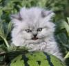 Аватар пользователя redyar rostov