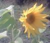 Аватар пользователя рожден под солнцем