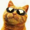 Аватар пользователя Рыжий кот